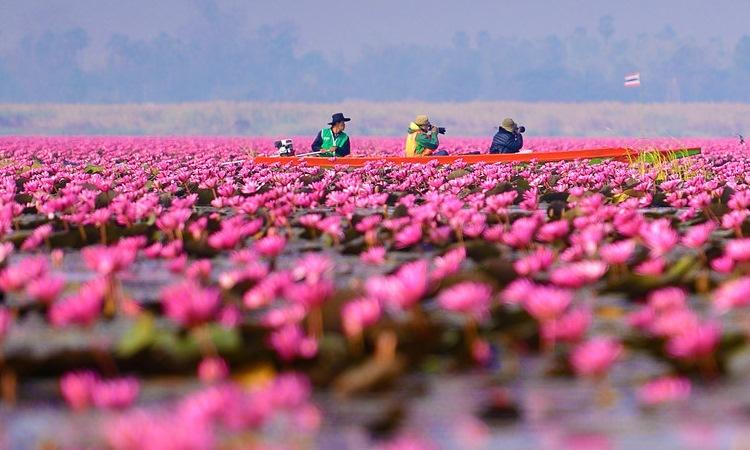 Pinke Lagune Frankreich